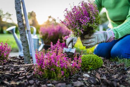 Gartenbedarf und Pflanzen auf Rechnung kaufen